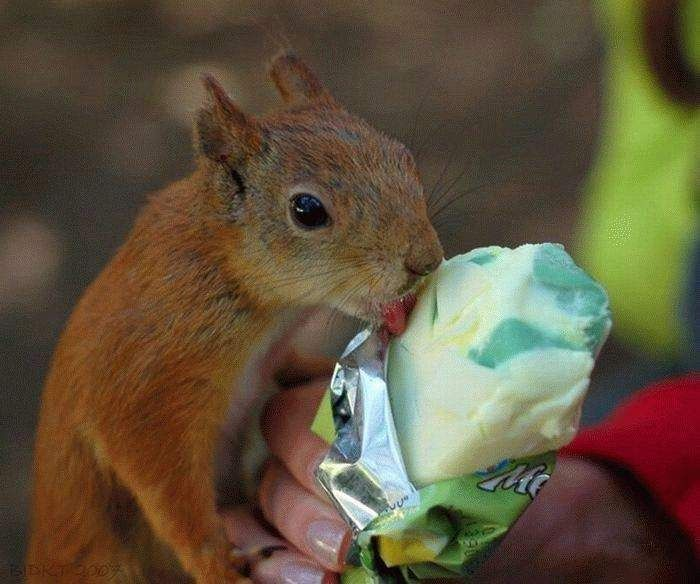 popsicle-eating-squirrel.jpg